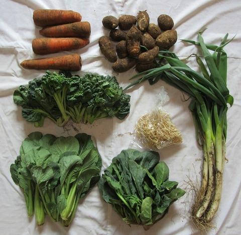 19産直野菜