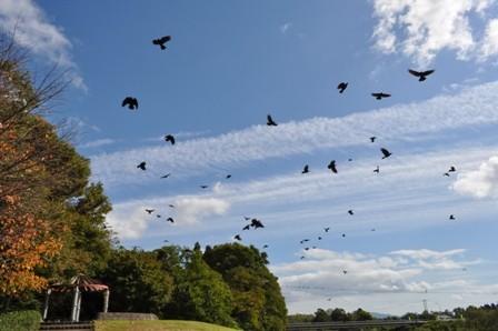 crow-10