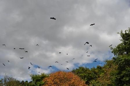crow-14