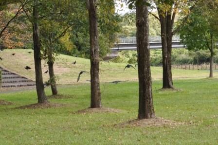 crow-7