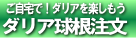 tyumon-logo1