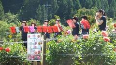 ダリア祭り小林撮影 (19)