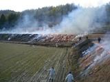 奈良の野焼き