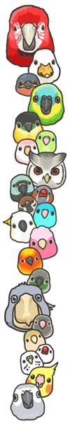 bird20