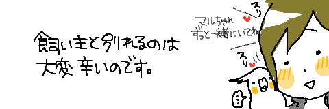マルといっしょ-02