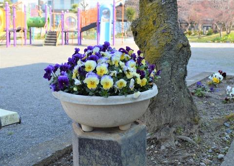 大分公園花4 (2)