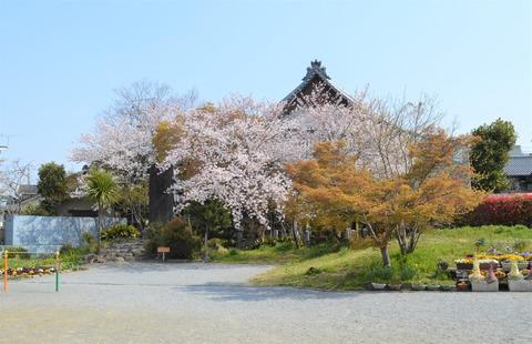 桜3 (2)