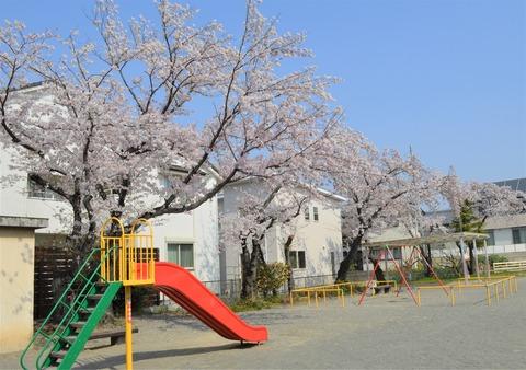 桜2-2 (2)