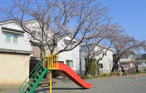 大仏公園花1 (2)