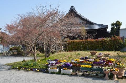 大仏公園花12