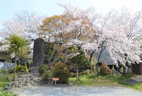 桜4-2 (2)