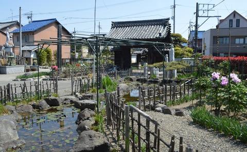 本覚寺15
