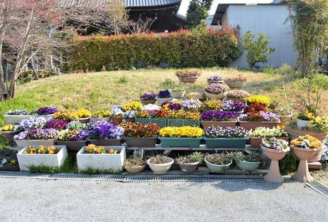 大仏公園花6 (2)