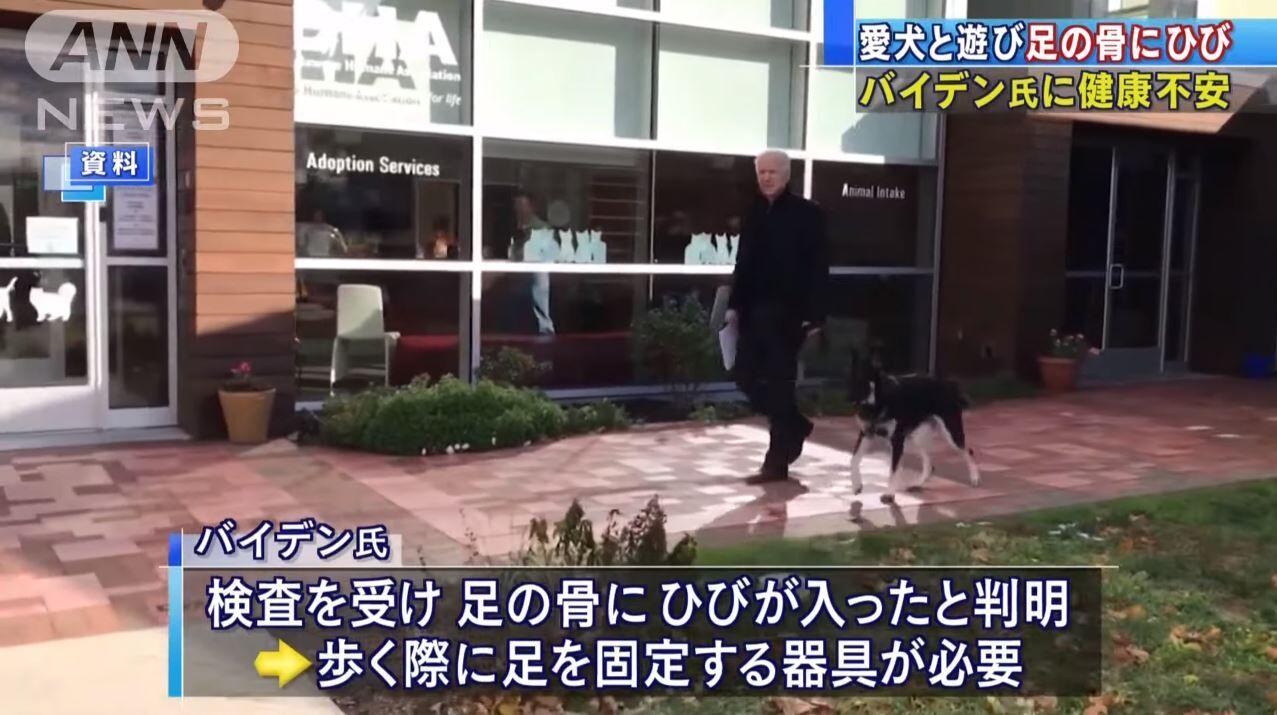 【悲報】バイデンさん、愛犬と遊んで足の骨にひび、憶測呼ぶ。
