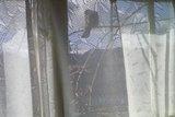 カーテン越しに鳥さん休憩中