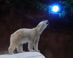 naight-zoo