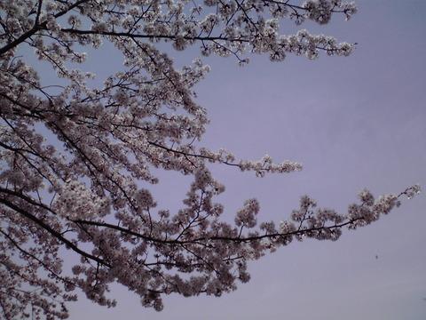 dainamaphoto_104