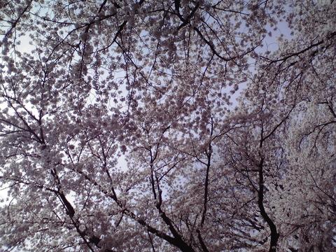 dainamaphoto_103