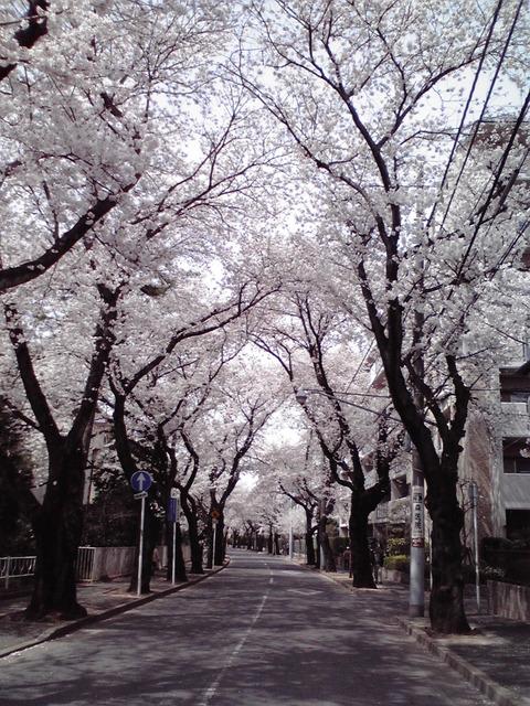 dainamaphoto_102
