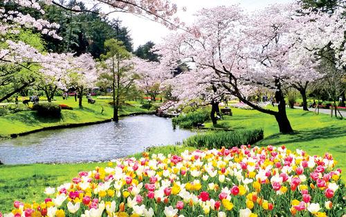②フラワーパーク桜(はままつフラワーパーク)