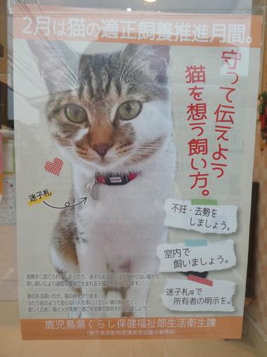 2月は猫の適正飼養推進月間。