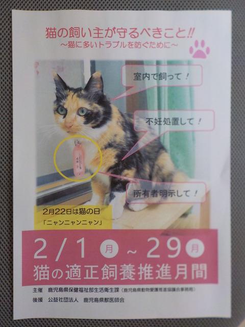 2月は(猫の適正飼養推進月間)です