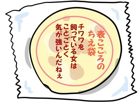 表こころブログ_知恵袋チワワ