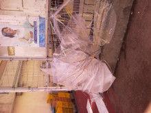 隣りのカプラさんち-Photo0985.jpg