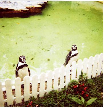 web_b_penguin