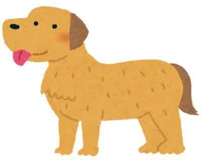 dog_golden_retriever-1