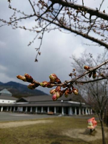 那須は春でした