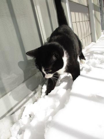 にゃんこも雪遊び