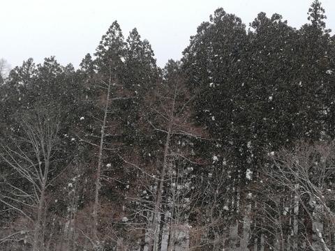 また雪になりました