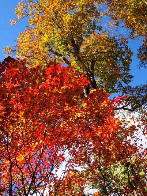 秋の裏燧林道