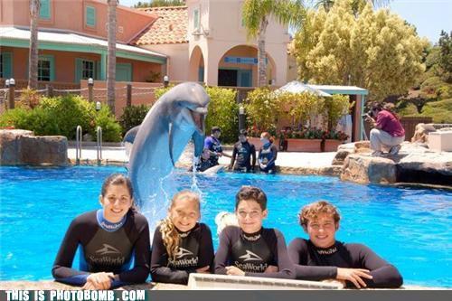 photobomb-that-guy-dolphin-bomb