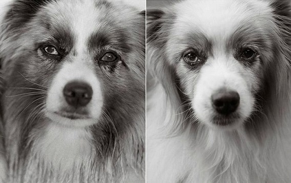 old_dogs_01