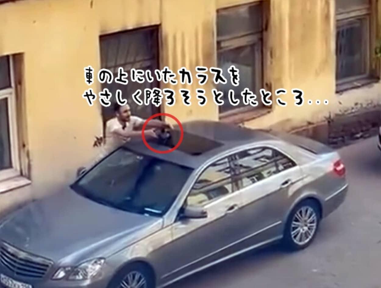 カラスを車から降ろそうとしたところ逆恨みされた男