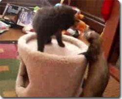 猫ふぃれっと