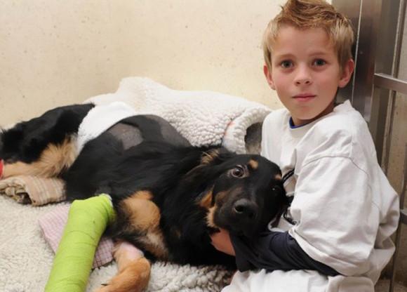 その身を投げ出し、命がけで人々を助けてくれた。のちにヒーローと称えられた10の犬