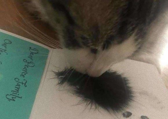 大親友の猫に先立たれて1か月。未だ悲しみに暮れる残された猫に、飼い主が遺毛を見せるとキュンとする反応が・・・