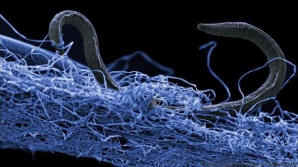 地球の地下世界には特殊な環境に生きる生物たちが独自の生態系を作り上げていた。