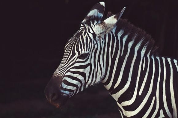 animal-1845897_640_e