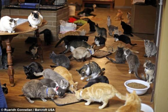 私財をなげうって、保護した1100匹の猫が安心して暮らせる場所を作った女性「キャットハウス・オン・ザ・キングス」(アメリカ)