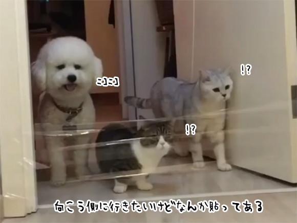 進路を阻む何かがある場合。猫ロジック vs 犬ロジック