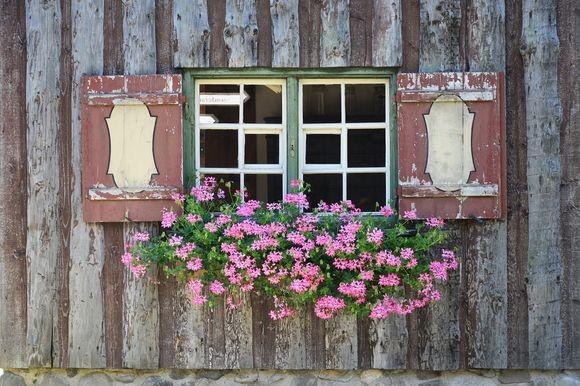 geranium_pixabay