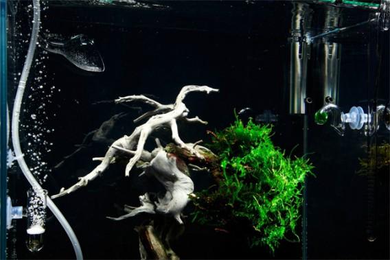 bonsai-2_e