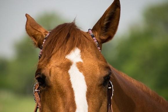 盗んだ馬で走り出した男。大きな馬を寝室に隠していたところを逮捕(アメリカ)