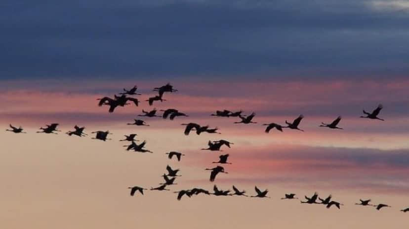 cranes-1622538_640_e