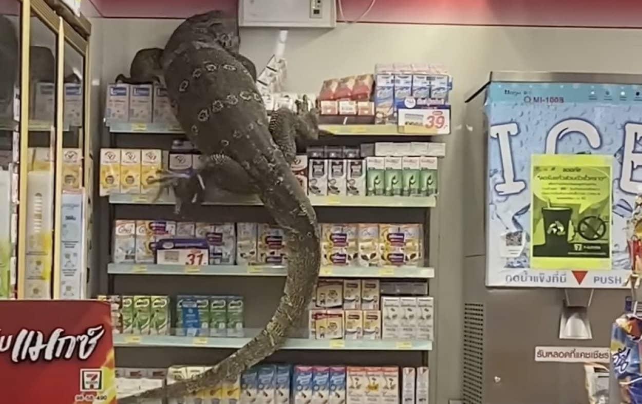 コンビニで巨大オオトカゲと遭遇!