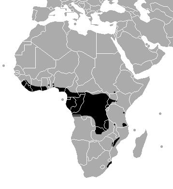 Bitis-gabonica-range-map